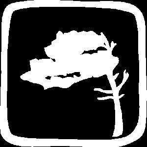 Region Fischland-Darß